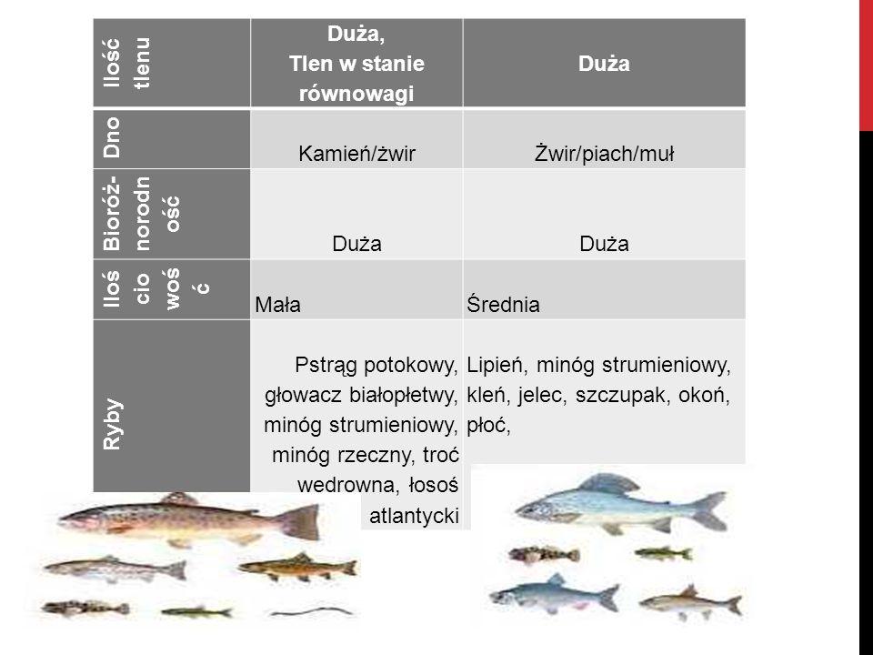 Ilość tlenu Duża, Tlen w stanie równowagi Duża Dno Kamień/żwir Żwir/piach/muł Bioróż- norodn ość Duża Duża Iloś cio woś ć Mała Średnia Ryby Pstrąg pot