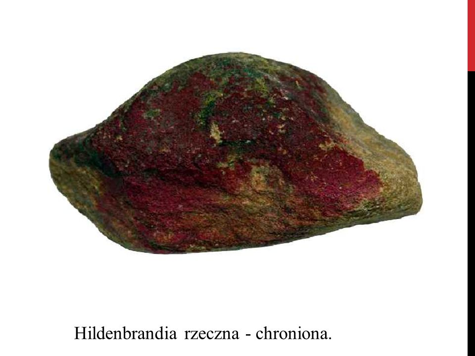 Hildenbrandia rzeczna - chroniona.