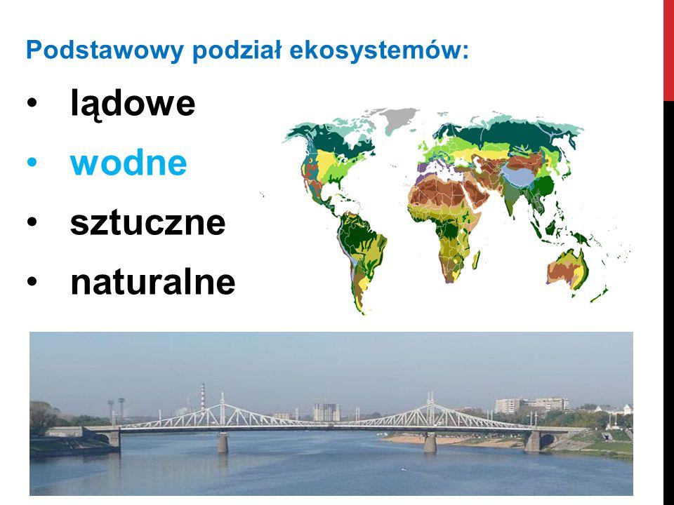 Podstawowy podział ekosystemów: lądowe wodne sztuczne naturalne