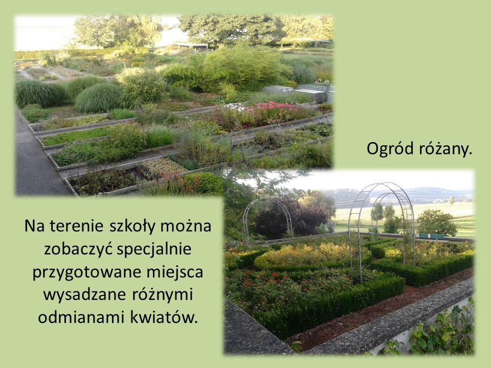 Na terenie szkoły można zobaczyć specjalnie przygotowane miejsca wysadzane różnymi odmianami kwiatów. Ogród różany.
