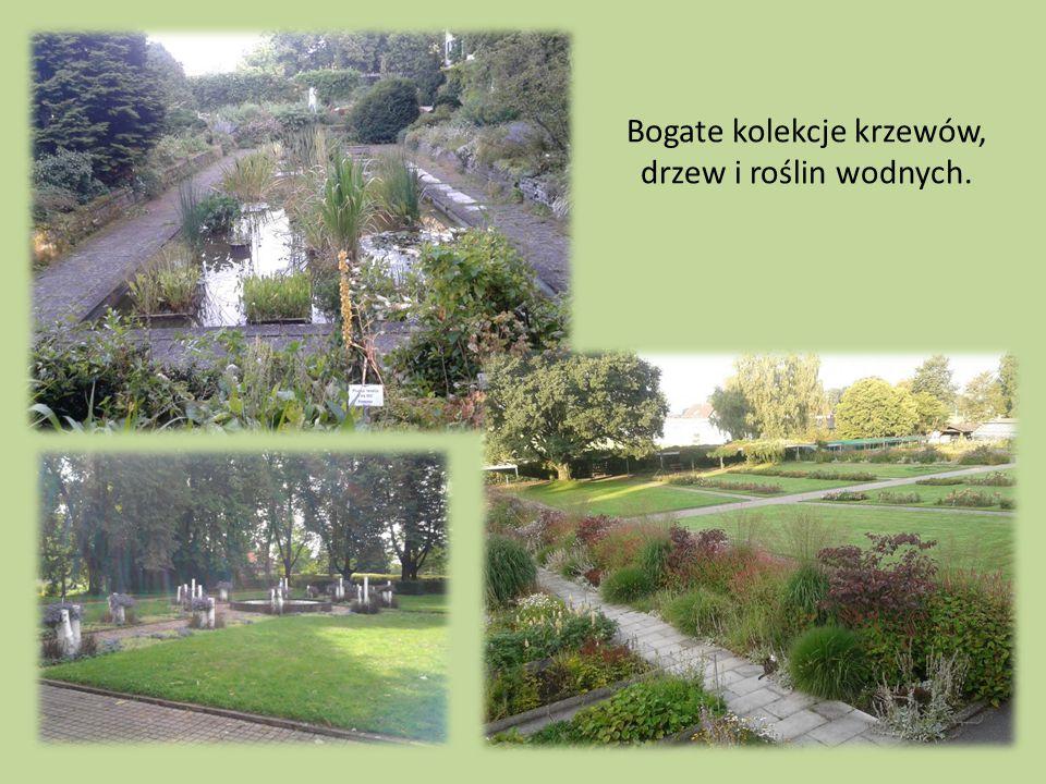 Bogate kolekcje krzewów, drzew i roślin wodnych.