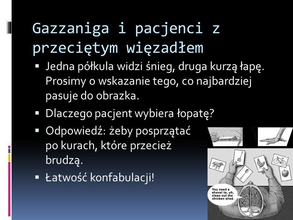Gazzaniga i pacjenci z przeciętym więzadłem  Jedna półkula widzi śnieg, druga kurzą łapę.