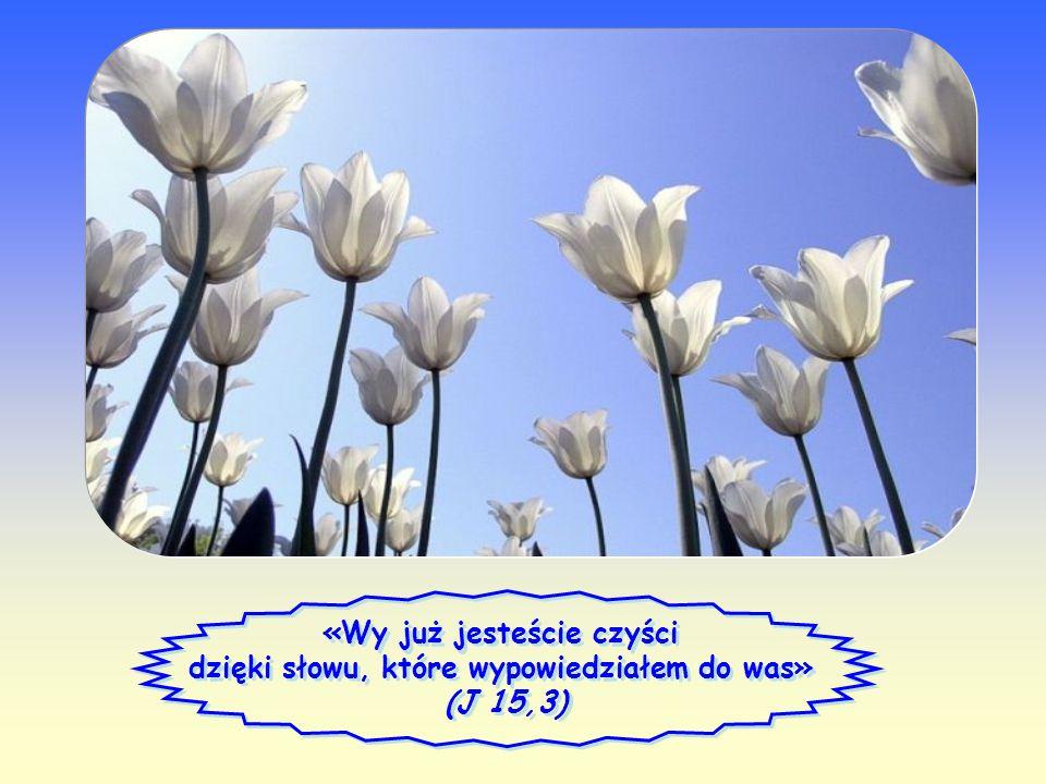 Słowo Życia Słowo Życia Kwiecień 2012 Kwiecień 2012