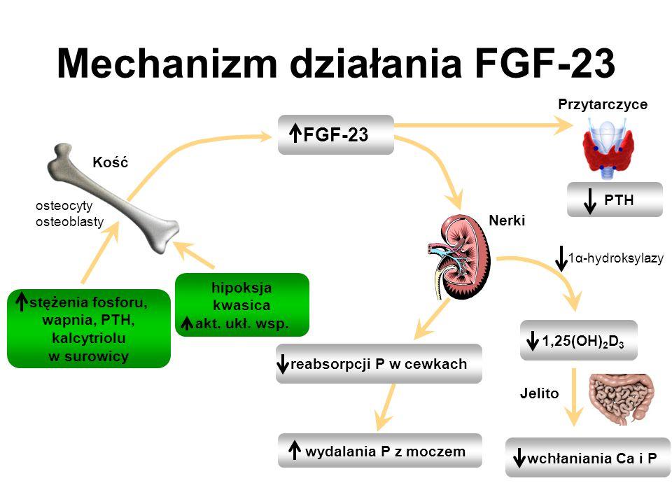 stężenia fosforu, wapnia, PTH, kalcytriolu w surowicy Mechanizm działania FGF-23 1,25(OH) 2 D 3 reabsorpcji P w cewkach Nerki FGF-23 wydalania P z moc