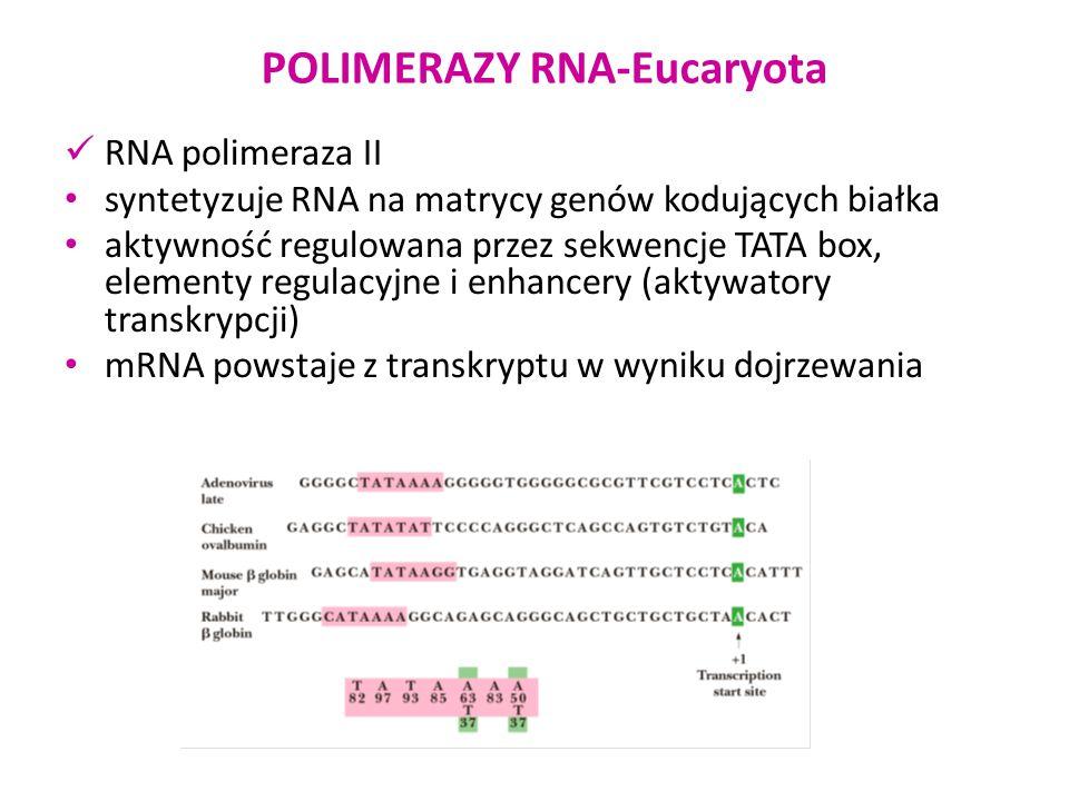 POLIMERAZY RNA-Eucaryota RNA polimeraza II syntetyzuje RNA na matrycy genów kodujących białka aktywność regulowana przez sekwencje TATA box, elementy