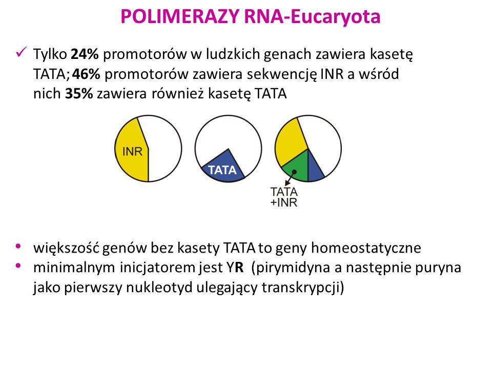 Tylko 24% promotorów w ludzkich genach zawiera kasetę TATA; 46% promotorów zawiera sekwencję INR a wśród nich 35% zawiera również kasetę TATA większoś