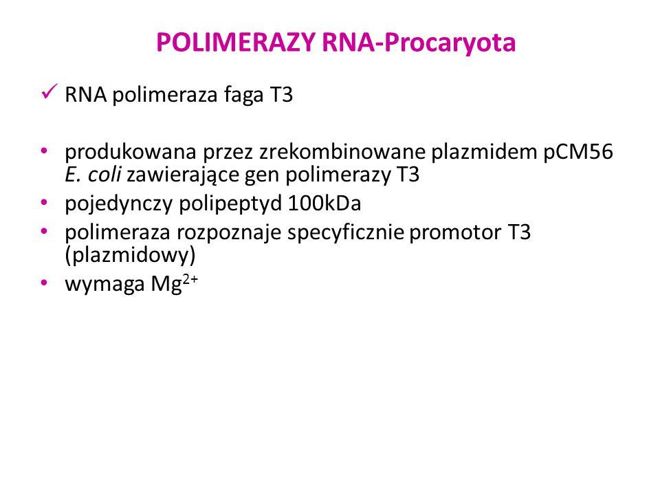 RNA polimeraza faga T3 produkowana przez zrekombinowane plazmidem pCM56 E. coli zawierające gen polimerazy T3 pojedynczy polipeptyd 100kDa polimeraza