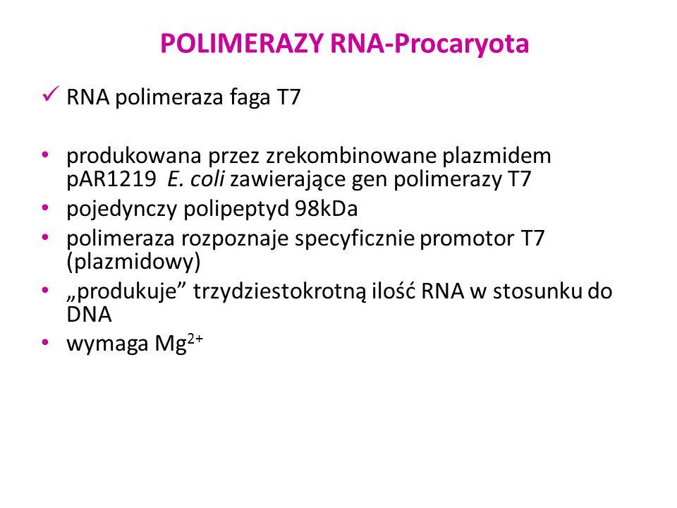 POLIMERAZY RNA-Procaryota RNA polimeraza faga T7 produkowana przez zrekombinowane plazmidem pAR1219 E. coli zawierające gen polimerazy T7 pojedynczy p