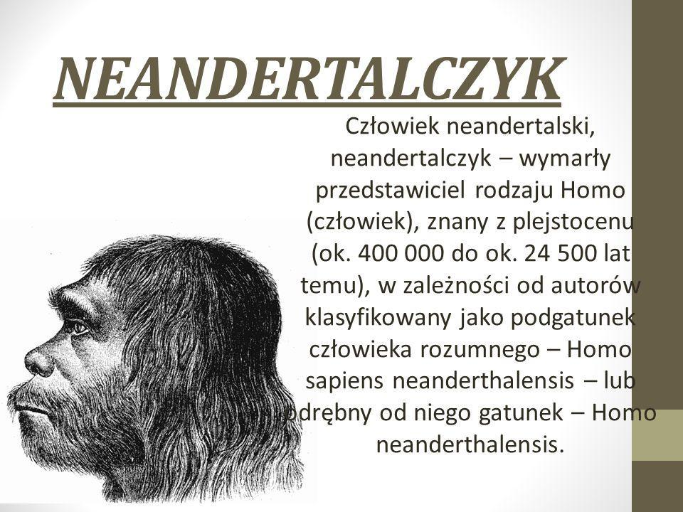 NEANDERTALCZYK Człowiek neandertalski, neandertalczyk – wymarły przedstawiciel rodzaju Homo (człowiek), znany z plejstocenu (ok. 400 000 do ok. 24 500