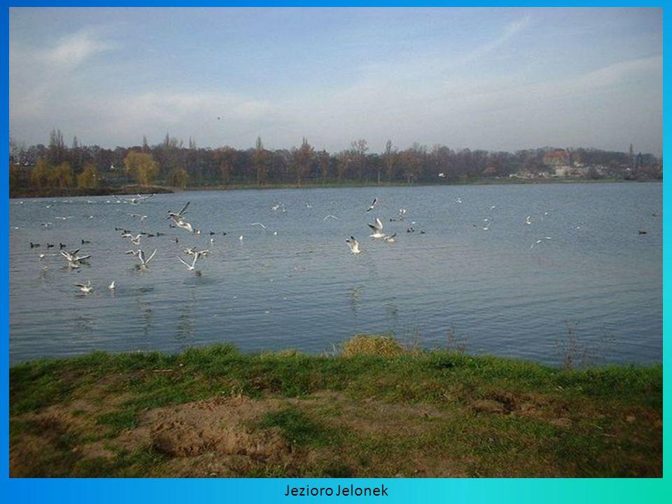 Jezioro Jelonek
