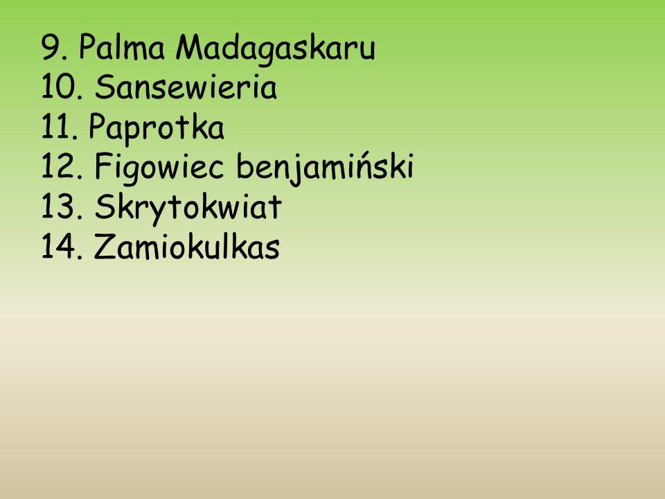 9. Palma Madagaskaru 10. Sansewieria 11. Paprotka 12.