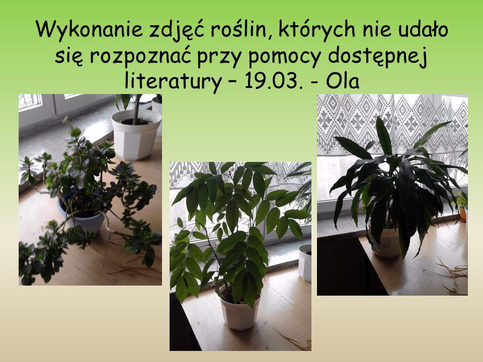 Wykonanie zdjęć roślin, których nie udało się rozpoznać przy pomocy dostępnej literatury – 19.03.