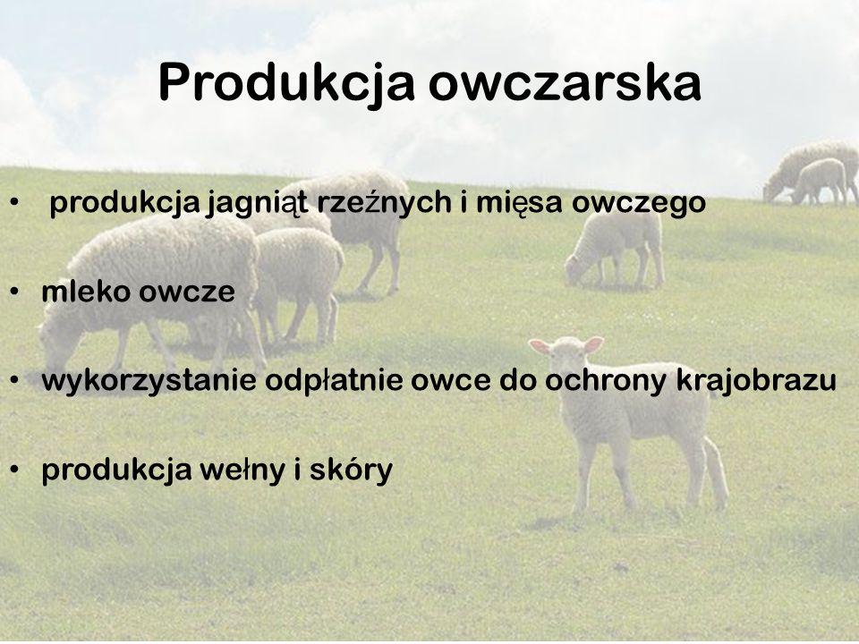 Produkcja owczarska produkcja jagni ą t rze ź nych i mi ę sa owczego mleko owcze wykorzystanie odp ł atnie owce do ochrony krajobrazu produkcja we ł n