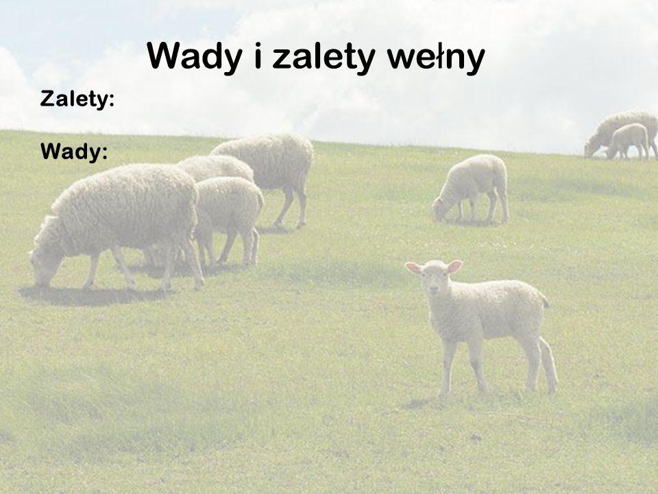 Zalety: Wady: Wady i zalety we ł ny