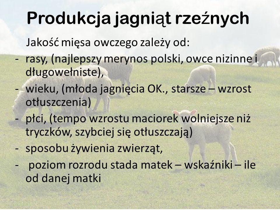Produkcja jagni ą t rze ź nych Jakość mięsa owczego zależy od: -rasy, (najlepszy merynos polski, owce nizinne i długowełniste), -wieku, (młoda jagnięc