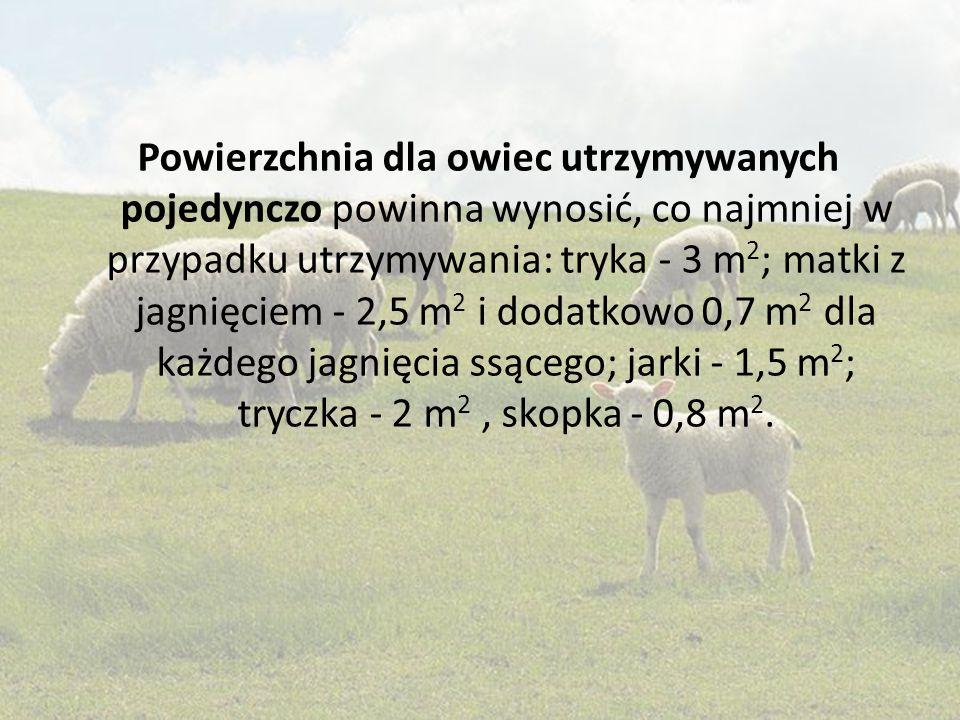 Powierzchnia dla owiec utrzymywanych pojedynczo powinna wynosić, co najmniej w przypadku utrzymywania: tryka - 3 m 2 ; matki z jagnięciem - 2,5 m 2 i
