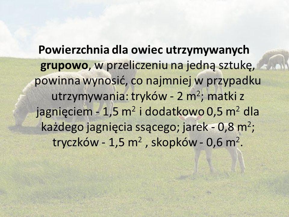 Powierzchnia dla owiec utrzymywanych grupowo, w przeliczeniu na jedną sztukę, powinna wynosić, co najmniej w przypadku utrzymywania: tryków - 2 m 2 ;