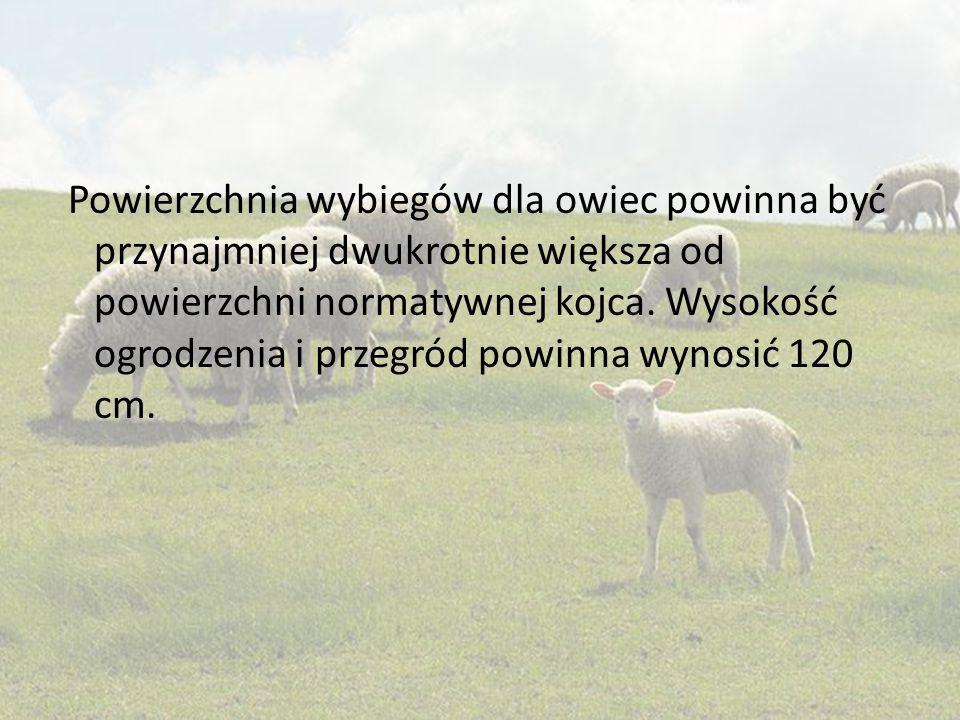 Powierzchnia wybiegów dla owiec powinna być przynajmniej dwukrotnie większa od powierzchni normatywnej kojca. Wysokość ogrodzenia i przegród powinna w