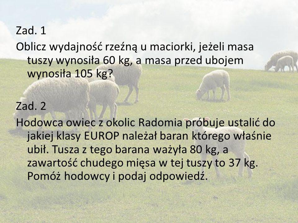 Zad. 1 Oblicz wydajność rzeźną u maciorki, jeżeli masa tuszy wynosiła 60 kg, a masa przed ubojem wynosiła 105 kg? Zad. 2 Hodowca owiec z okolic Radomi