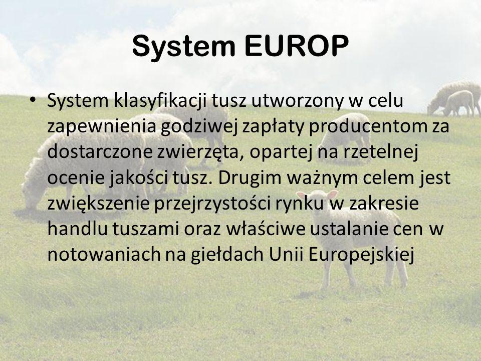 System EUROP System klasyfikacji tusz utworzony w celu zapewnienia godziwej zapłaty producentom za dostarczone zwierzęta, opartej na rzetelnej ocenie