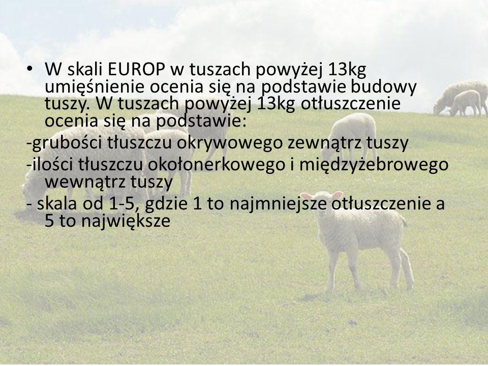W skali EUROP w tuszach powyżej 13kg umięśnienie ocenia się na podstawie budowy tuszy. W tuszach powyżej 13kg otłuszczenie ocenia się na podstawie: -g