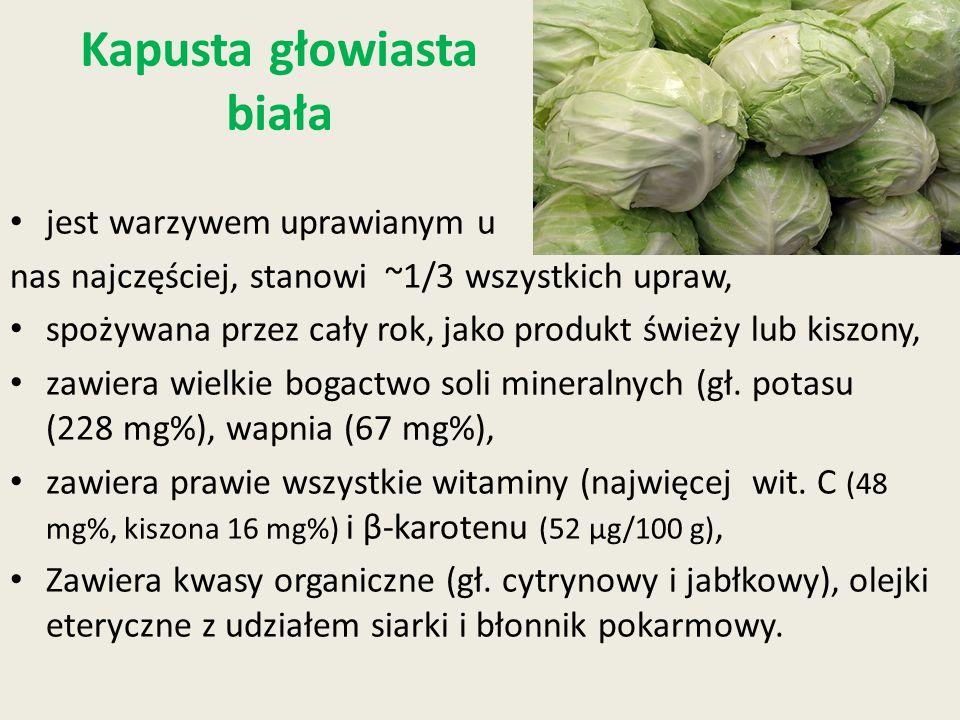 Kapusta głowiasta biała jest warzywem uprawianym u nas najczęściej, stanowi ~1/3 wszystkich upraw, spożywana przez cały rok, jako produkt świeży lub k