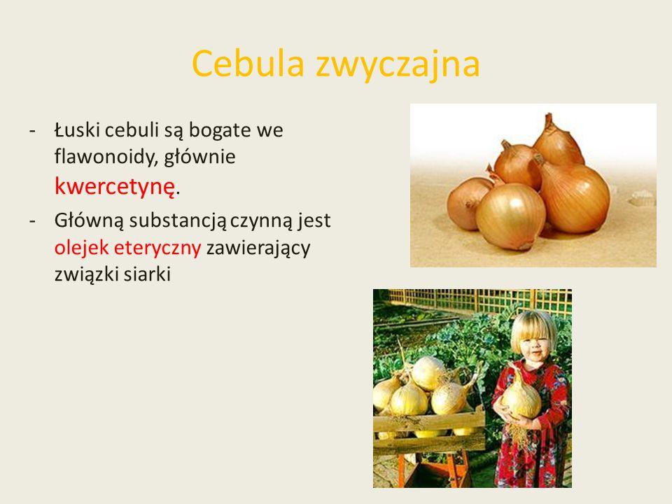 Cebula zwyczajna -Łuski cebuli są bogate we flawonoidy, głównie kwercetynę. -Główną substancją czynną jest olejek eteryczny zawierający związki siarki