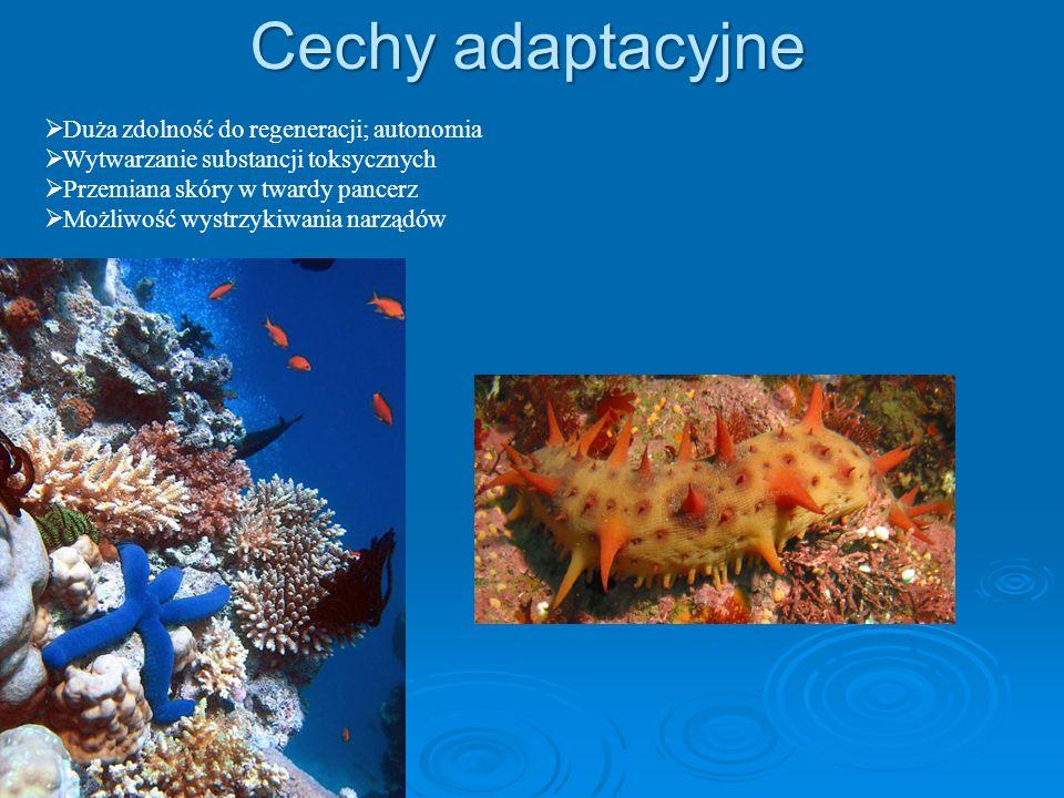 Cechy adaptacyjne  Duża zdolność do regeneracji; autonomia  Wytwarzanie substancji toksycznych  Przemiana skóry w twardy pancerz  Możliwość wystrzykiwania narządów