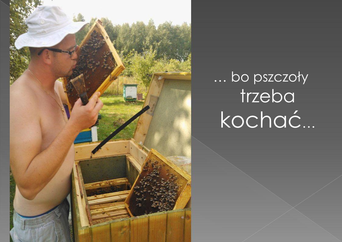 … bo pszczoły trzeba kochać …