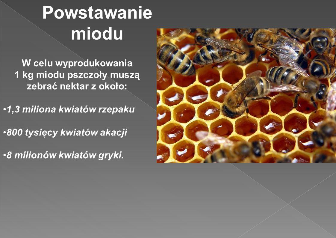 Powstawanie miodu W celu wyprodukowania 1 kg miodu pszczoły muszą zebrać nektar z około: 1,3 miliona kwiatów rzepaku 800 tysięcy kwiatów akacji 8 mili