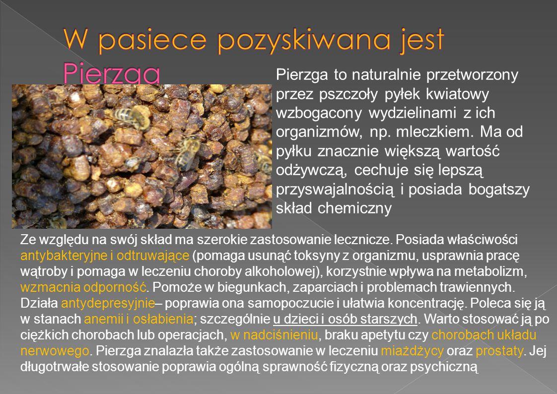 Pierzga to naturalnie przetworzony przez pszczoły pyłek kwiatowy wzbogacony wydzielinami z ich organizmów, np. mleczkiem. Ma od pyłku znacznie większą