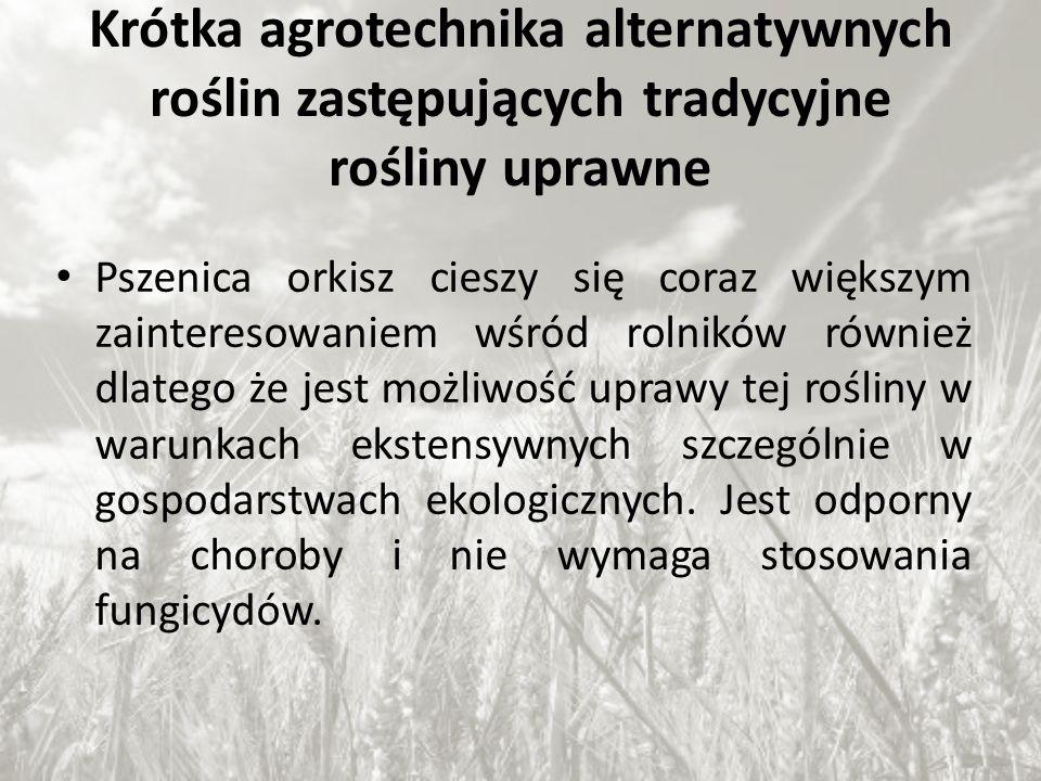 Krótka agrotechnika alternatywnych roślin zastępujących tradycyjne rośliny uprawne Pszenica orkisz cieszy się coraz większym zainteresowaniem wśród ro
