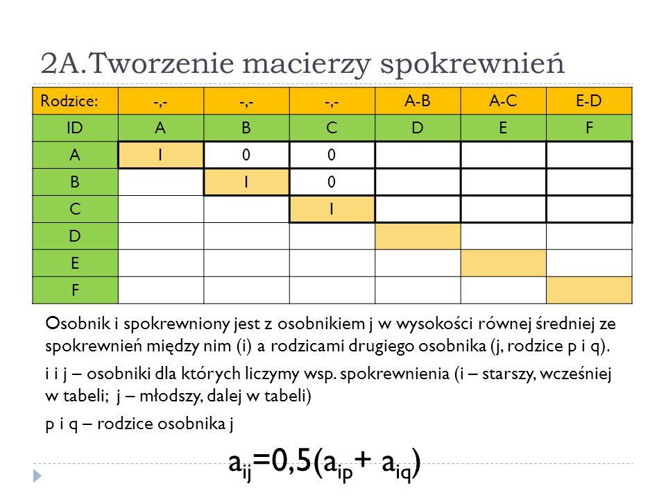 2A.Tworzenie macierzy spokrewnień Rodzice:-,- A-BA-CE-D IDABCDEF A100 B10 C1 D E F Osobnik i spokrewniony jest z osobnikiem j w wysokości równej średn