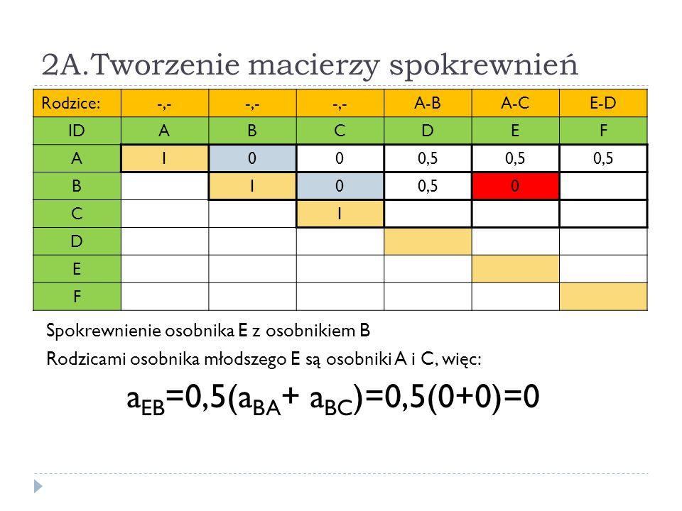 2A.Tworzenie macierzy spokrewnień Rodzice:-,- A-BA-CE-D IDABCDEF A1000,5 B10 0 C1 D E F Spokrewnienie osobnika E z osobnikiem B Rodzicami osobnika mło