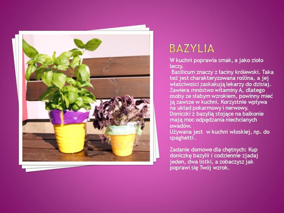 W kuchni poprawia smak, a jako zioło leczy. Basilicum znaczy z łaciny królewski. Taka też jest charakteryzowana roślina, a jej właściwości zaskakują l