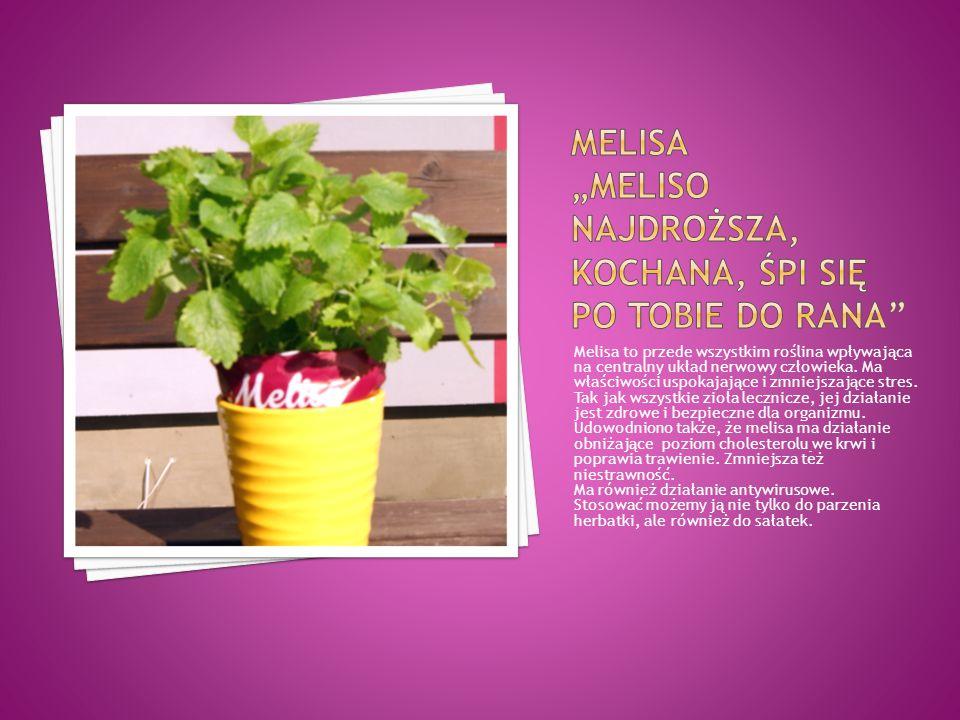 Melisa to przede wszystkim roślina wpływająca na centralny układ nerwowy człowieka. Ma właściwości uspokajające i zmniejszające stres. Tak jak wszystk