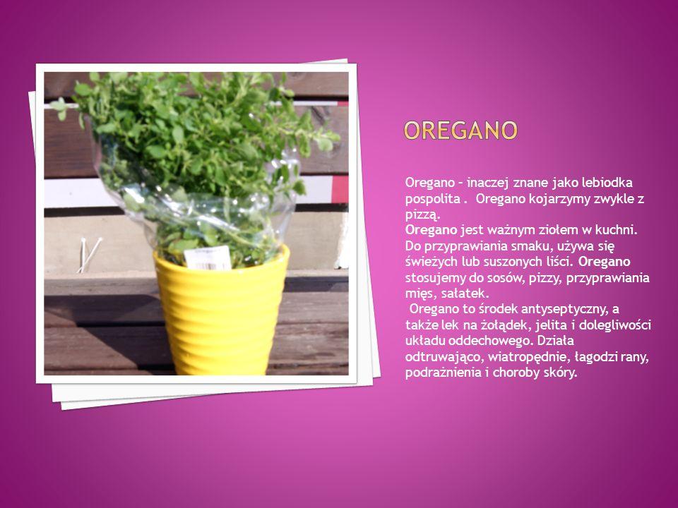 Oregano – inaczej znane jako lebiodka pospolita. Oregano kojarzymy zwykle z pizzą. Oregano jest ważnym ziołem w kuchni. Do przyprawiania smaku, używa