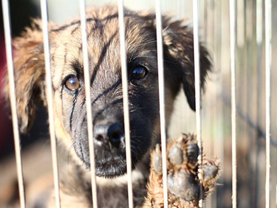 Aby adoptować zwierzę należy być osobą pełnoletnią, posiadać przy sobie dokument ze zdjęciem - DOWÓD OSOBISTY, smycz, obrożę i kaganiec (w razie transportu psa komunikacją miejską) a dla kota transporter.