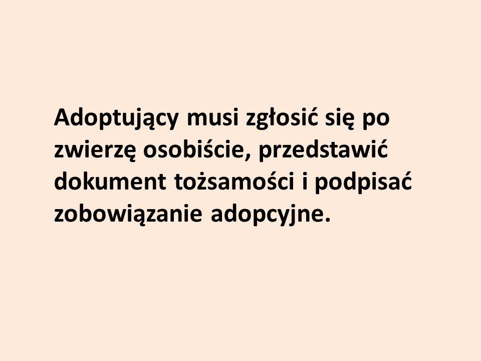 Adoptujący musi zgłosić się po zwierzę osobiście, przedstawić dokument tożsamości i podpisać zobowiązanie adopcyjne.