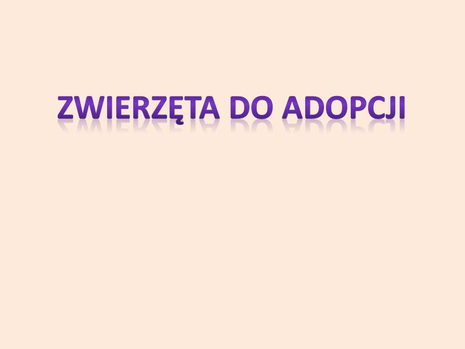 Dane osobowe osób adoptujących są chronione, tzn.