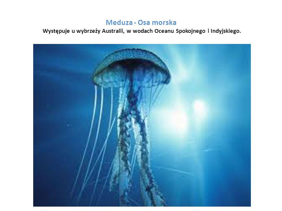 Dziobak jest doskonale przystosowany do życia pod wodą.