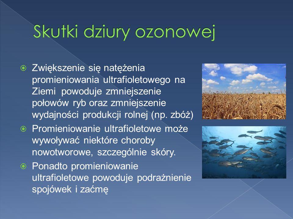  Zwiększenie się natężenia promieniowania ultrafioletowego na Ziemi powoduje zmniejszenie połowów ryb oraz zmniejszenie wydajności produkcji rolnej (np.