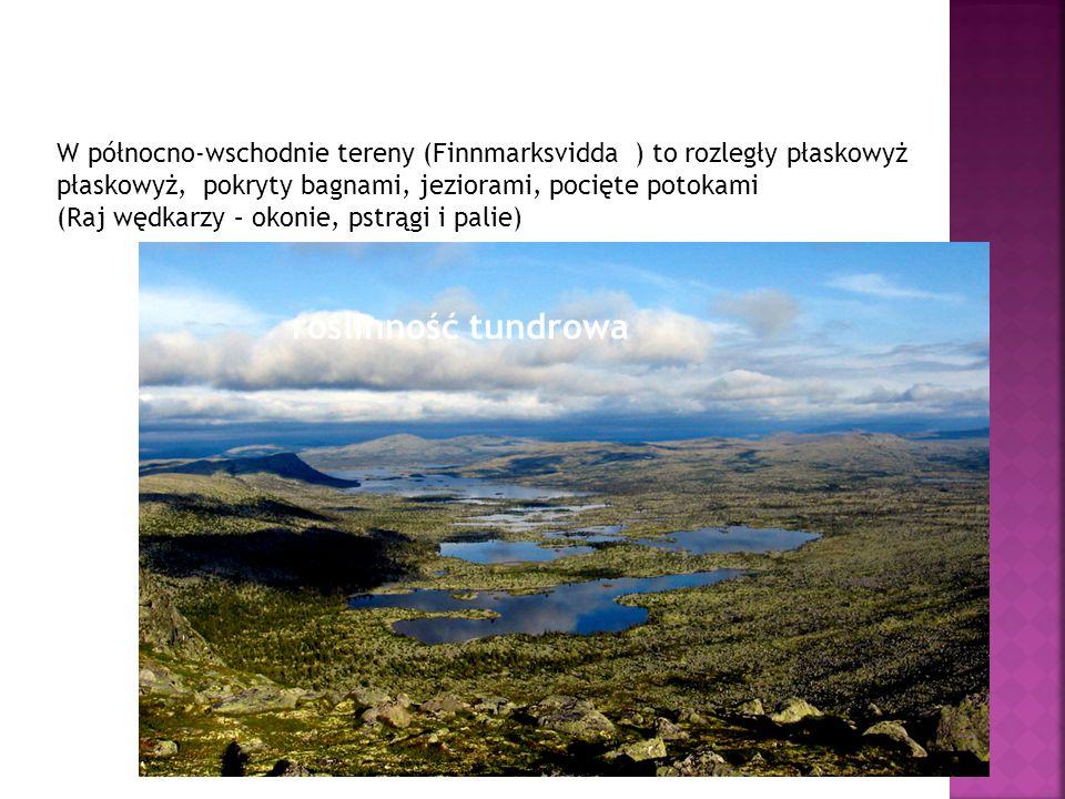 W północno-wschodnie tereny (Finnmarksvidda ) to rozległy płaskowyż płaskowyż, pokryty bagnami, jeziorami, pocięte potokami (Raj wędkarzy – okonie, ps