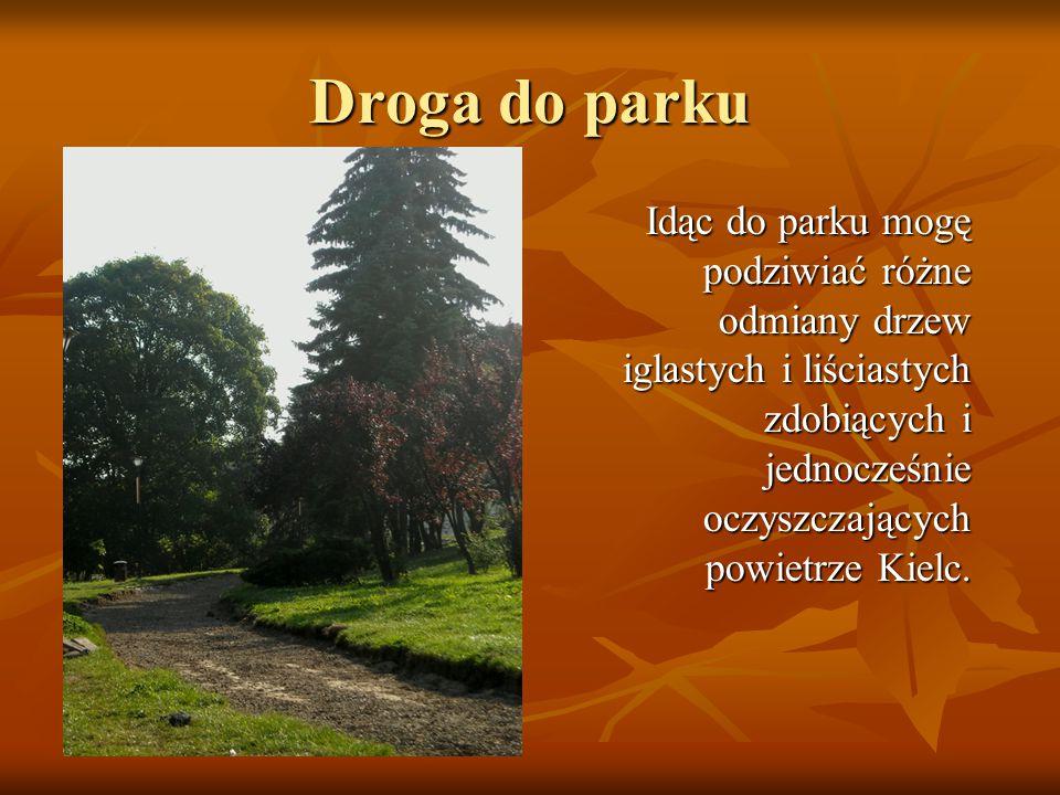 Idąc do parku mogę podziwiać różne odmiany drzew iglastych i liściastych zdobiących i jednocześnie oczyszczających powietrze Kielc. Droga do parku