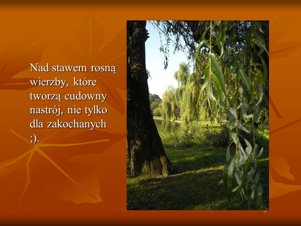 Nad stawem rosną wierzby, które tworzą cudowny nastrój, nie tylko dla zakochanych ;).