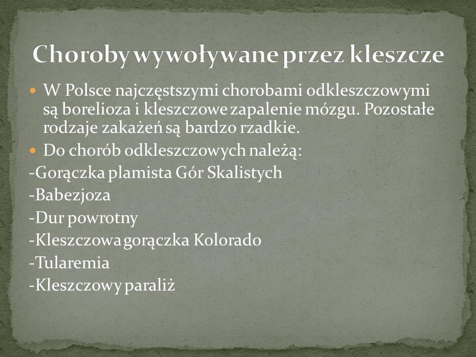 W Polsce najczęstszymi chorobami odkleszczowymi są borelioza i kleszczowe zapalenie mózgu.