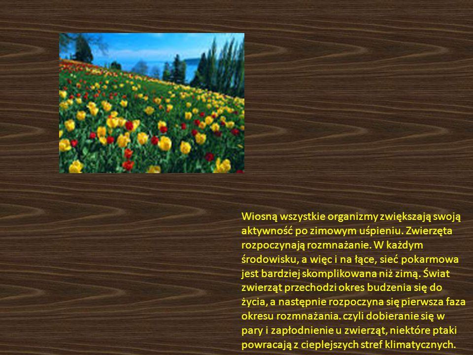 Wiosną wszystkie organizmy zwiększają swoją aktywność po zimowym uśpieniu. Zwierzęta rozpoczynają rozmnażanie. W każdym środowisku, a więc i na łące,
