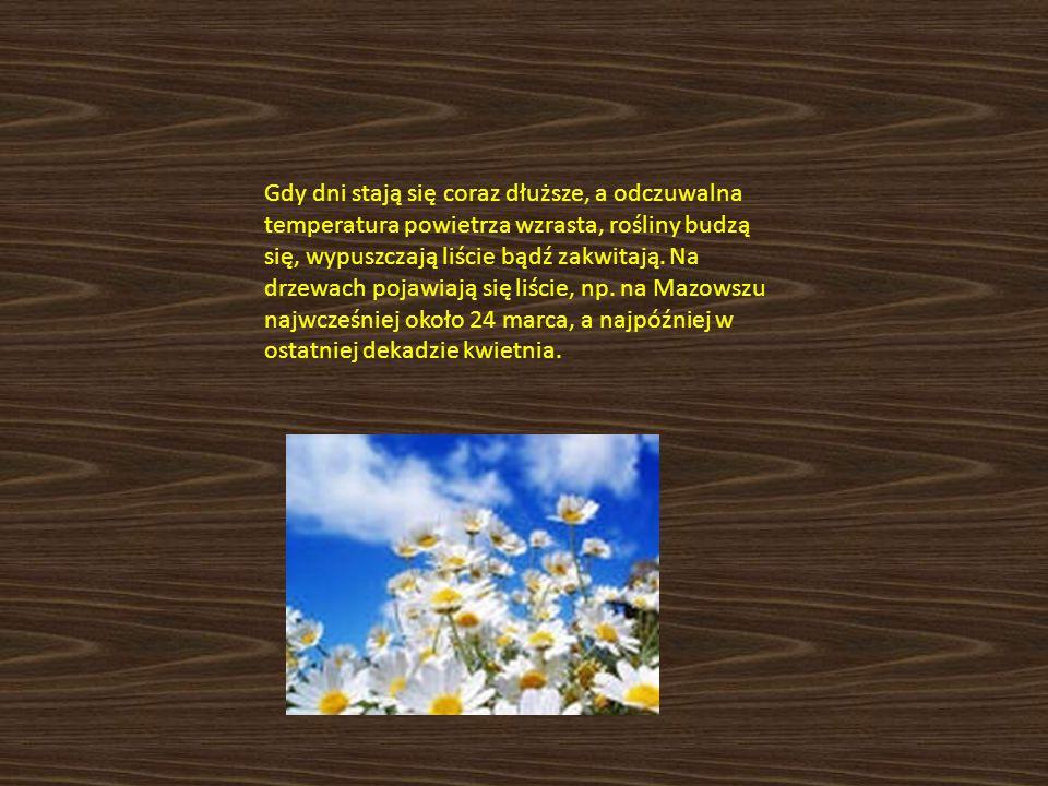 Gdy dni stają się coraz dłuższe, a odczuwalna temperatura powietrza wzrasta, rośliny budzą się, wypuszczają liście bądź zakwitają. Na drzewach pojawia