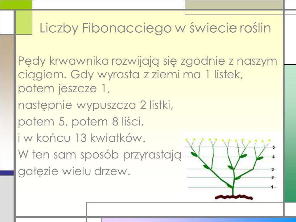 Liczby Fibonacciego w świecie roślin Pędy krwawnika rozwijają się zgodnie z naszym ciągiem. Gdy wyrasta z ziemi ma 1 listek, potem jeszcze 1, następni