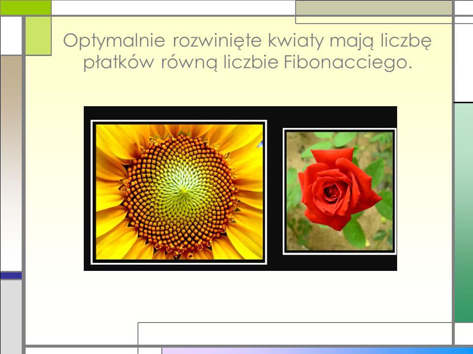Optymalnie rozwinięte kwiaty mają liczbę płatków równą liczbie Fibonacciego.